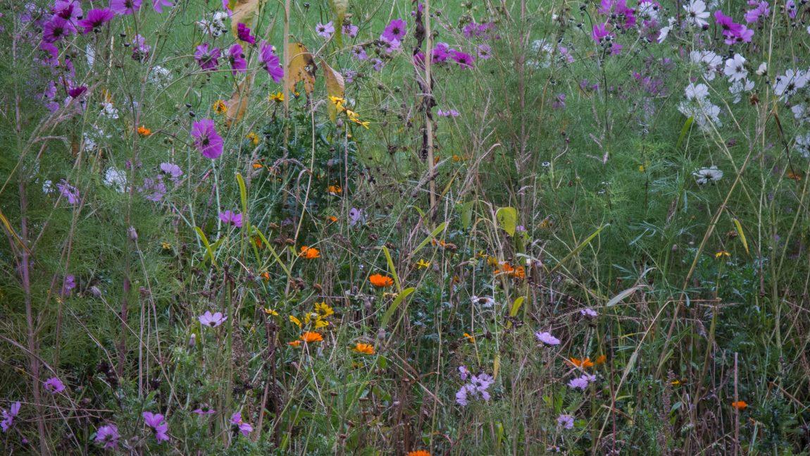 Informatieavond voor meer biodiversiteit in de gemeente Neder-Betuwe